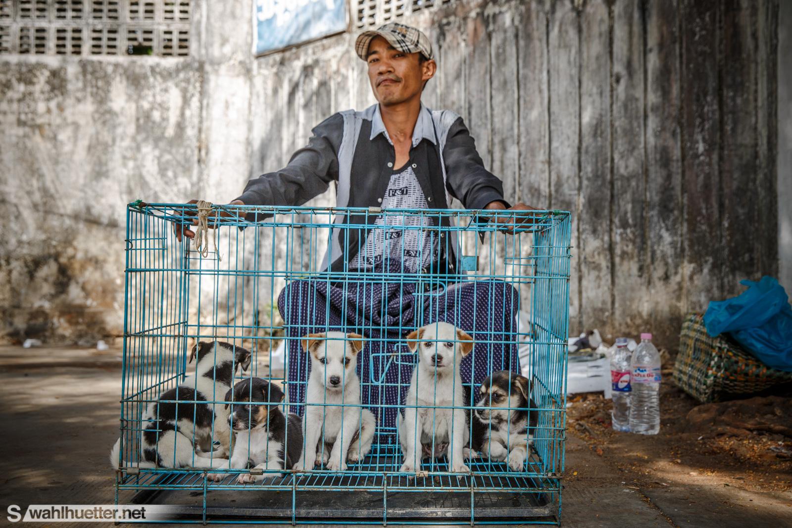 Myanmar-9736